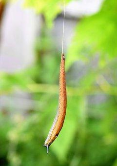Slug, Snail, Mollusk, Nature, Brown, Slowly, Mucus