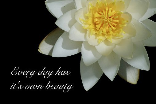 Water Lily, Water Flower, Poetry, Saying