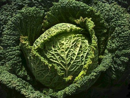 Vegetables, Savoy, Welsch Herb, Savoy Cabbage, Wirz