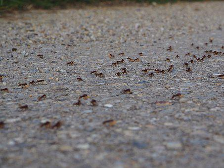 Ants, Hike, Change Of Location, Transport, Nature