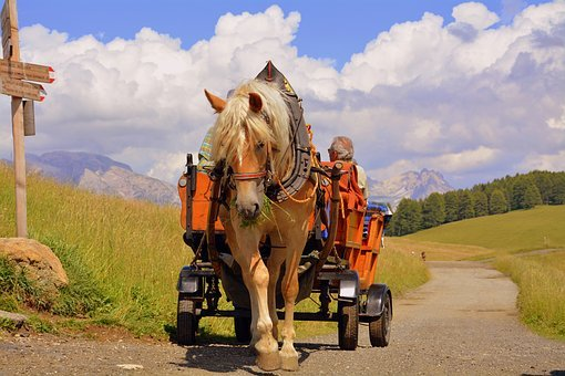 Horse, Calash, Dolomites, Carrozza, Road, Animals