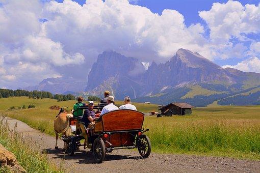 Horse, Calash, Carrozza, Road, Animals, Coachman
