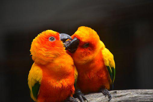 Parrot, Kissing, Bird, Love, Nature, Wildlife, Colorful
