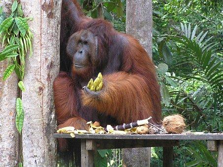 Borneo, Kuching, Bako Park