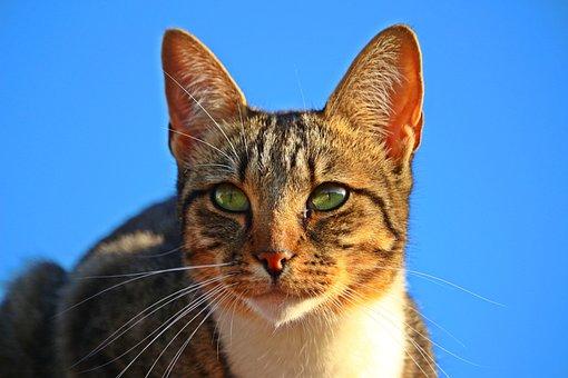 Mieze, Kitten, Cat, Mackerel, Tiger Cat, Domestic Cat