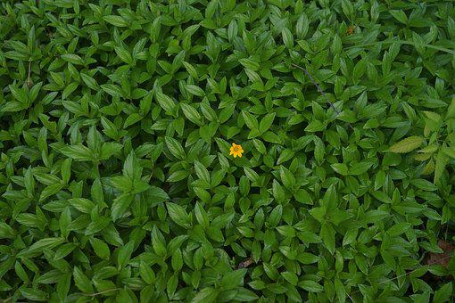 Green, Leaves, Single Yellow Flower, Nature, Summer