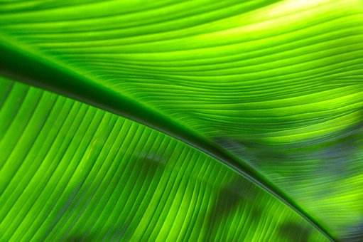 Tropical, Green, Leaf, Plant, Leaves, Tree, Nature