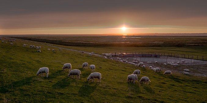 East Frisia, Sheep, Dike, Animals, Wool, Sky