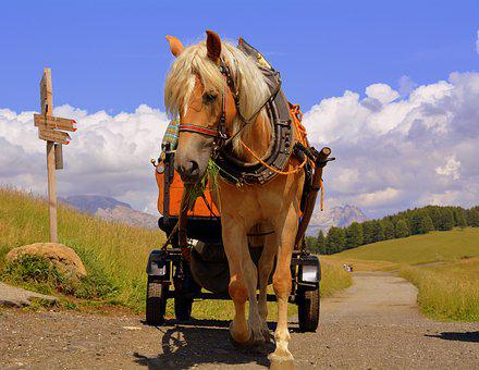 Horse, Calash, Road, Path, Direction, Sky Clouds