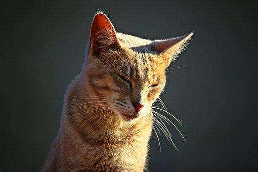 Cat, Kitten, Mieze, Tiger Cat, Mackerel, Pet
