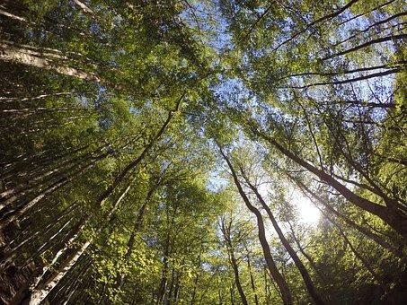 Trees, National Park, Ferragosto, Italy, Abruzzo