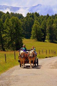 Horse, Calash, Carrozza, Road, Forest, Trees, Animals