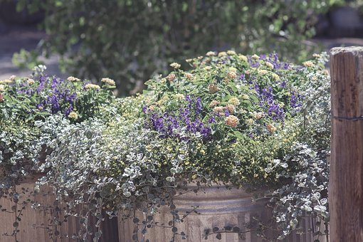 Rustic, Flowers, Spring, Vintage, Nature, Wooden