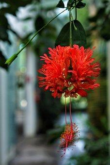 Flower, Hanging, Botanical, Gardens, Orto Botanico