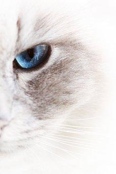 Cats, Pet, White, Soft, Animal, Cat, Hangover, Animals