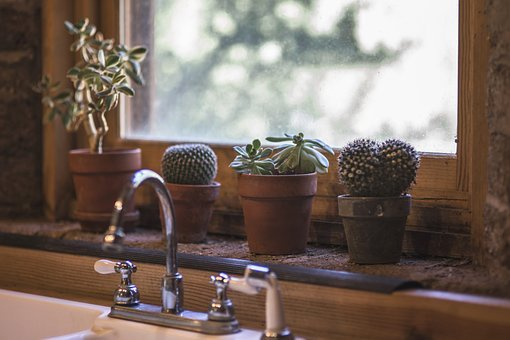 Cactus, Kitchen, Design, Interior, Table, Modern, Sink