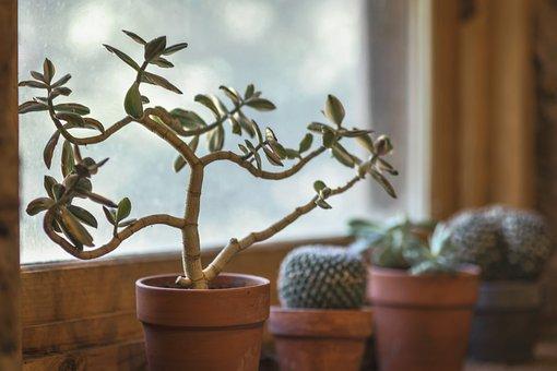 Cactus, Window, Kitchen, Pot, Interior, Design