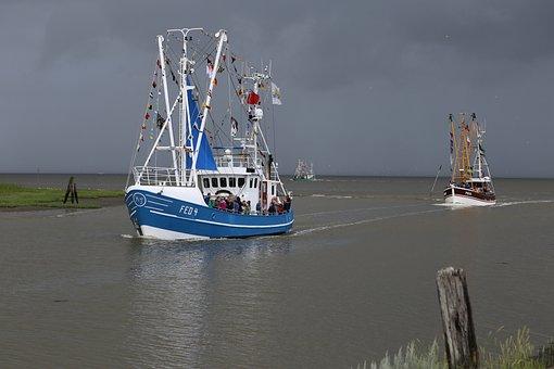 Shrimp, Port Fedderwardersiel, Boat Regatta