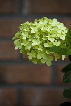 Summer, Summer Flowers, Flowers, Nature, Plants, Bud