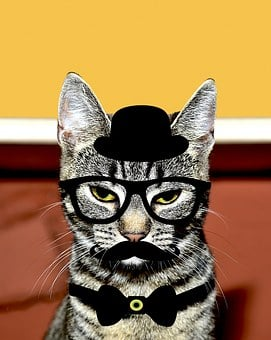 Cat, Feline, Kitty, Whiskers, Black Hat, Spectacles