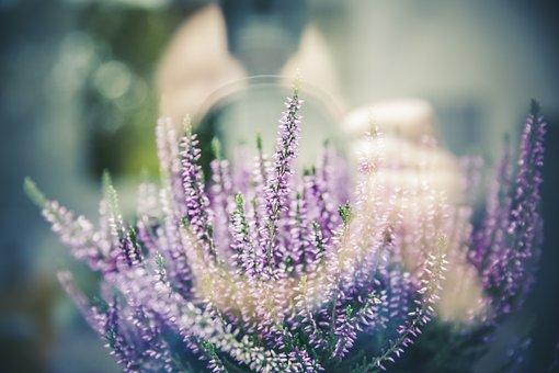 Lavender, Plant, Flowers, Flower