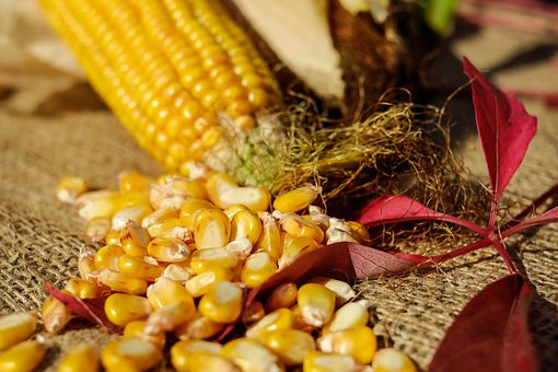 Corn, Corn Kernels, Yellow, Corn On The Cob, Vegetables