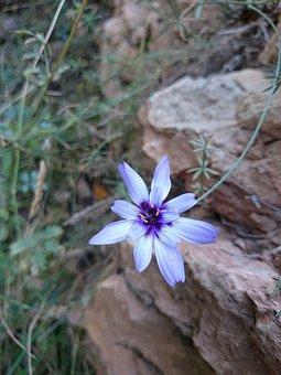 Flower, Violin, Nature, Rock, White, Blue, Green, Light