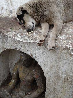 Dog, Statue, Buddha, Homeless, Animals, Sleep, Outdoors