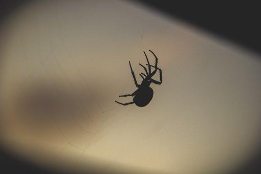 Night, Dark, Fall, Spider, Spider's Web
