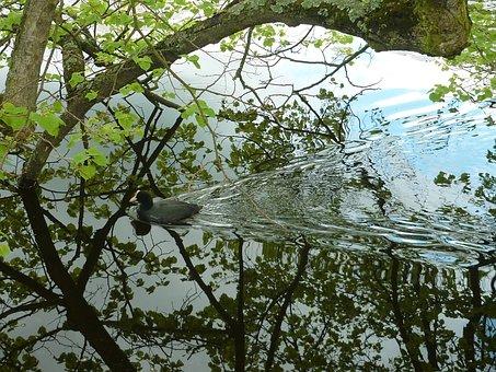 Duck, Foliage, Water, Heaven, Reflection, Green, Trees