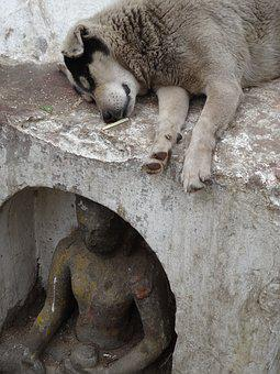 Dog, Statue, Buddha, Homeless, Animals, Sleep, Outdoors