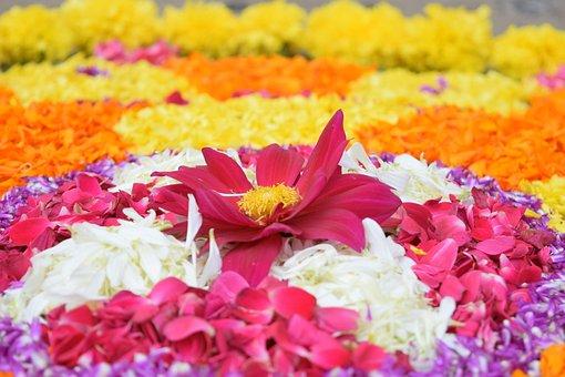Onam, Kerala, Festival, India, Traditional, Hindu