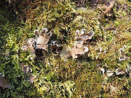 Mushrooms, Moss, Curled Crater Elle