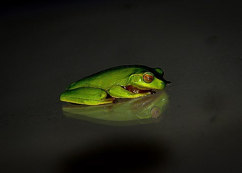 Frog, Wildlife, Green, Small, Reflection, Night, Black