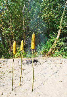 Roasted Corn, Nature, Stick, Food, Natural Food