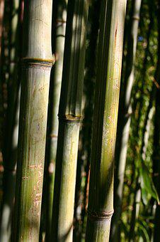Bamboo, Bamboo Cane, Plant, Nature, Park, Structure