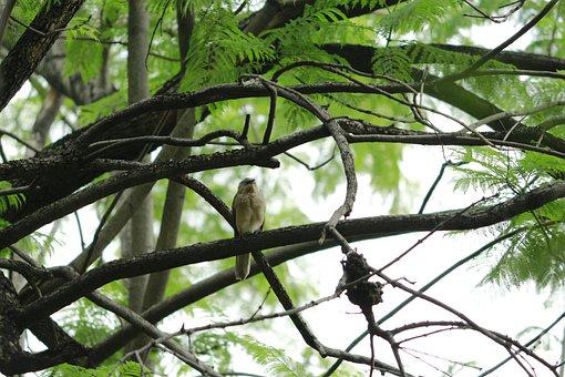Mating, Birds, R, Natural, Season, Feather, Spring