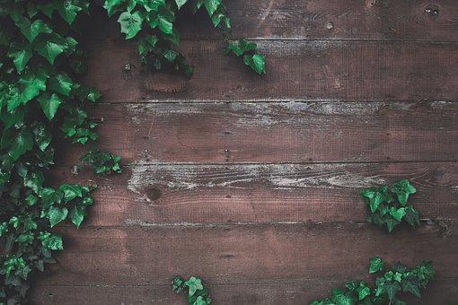 Wooden, Floor, Green, Plants, Nature