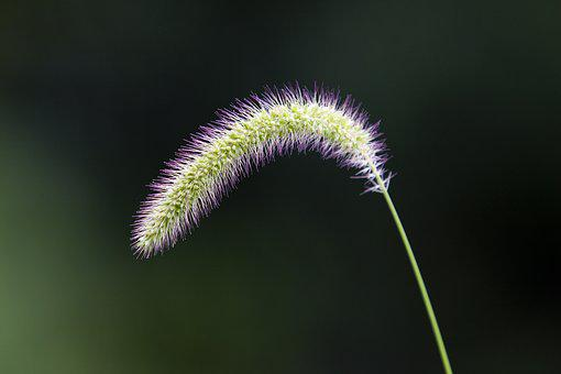 Foxtail, Nature, Pool, Forest, Green, Plants, Abstract
