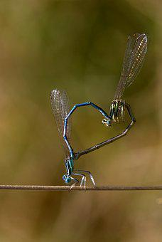 Dragonfly, Reproduction, Insecta, Wings, Plant, Nature