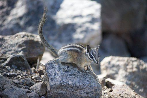 Chipmunk, Cute, Environment, Rodent, Squirrel, Forest