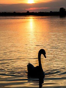 Sunset, Orange, Swan, Landscape, Nature, Horizon