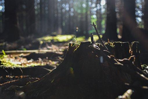 Forest, Stump, Wood, Trees, Nature, Vegetation