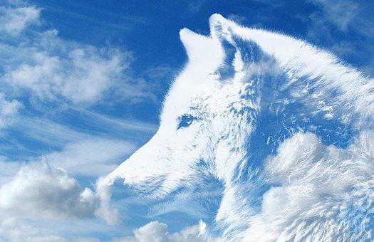 Wolf, Clouds, Sky, Atmosphere, Mythology, White