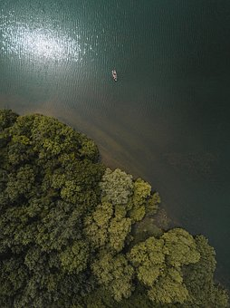 Green, Trees, Forest, Plants, Nature, Aerial, View, Sea