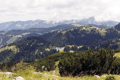 Hochkar, Austria, Summer, Field, Nature, Plants