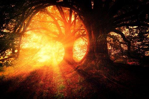 Trees, Plant, Nature, Forests, Sunrise, Sunshine