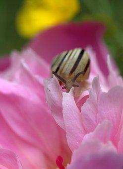 Snail, Shell, Horns, My Saturday, Flower, Pink