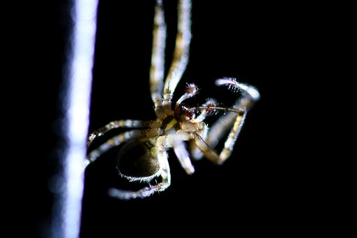 Spider, Insect, Macro, Animal, Nature, Wildlife