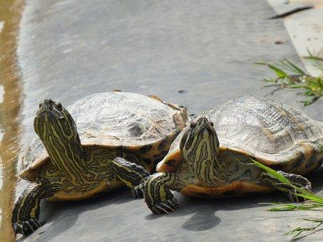 Turtles, Sun, On The Water